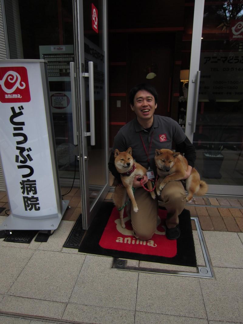 Tokyo's Anima Animal Hospital's veterinarian Chikao Muratani with two shiba inu puppies.