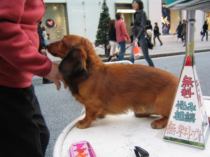 This cute dog and her human visited Judit Kawaguchi a few times. Lots of troubles unloaded.
