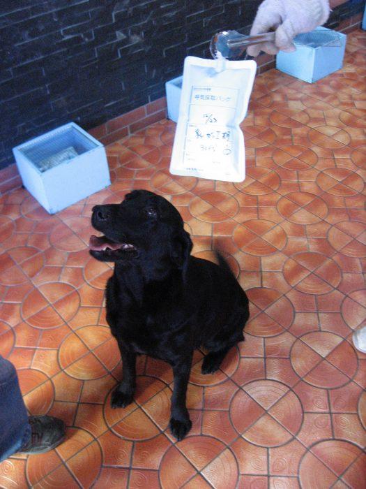 Yuji Sato and Marine — Dog trainer and dog | Words to Live