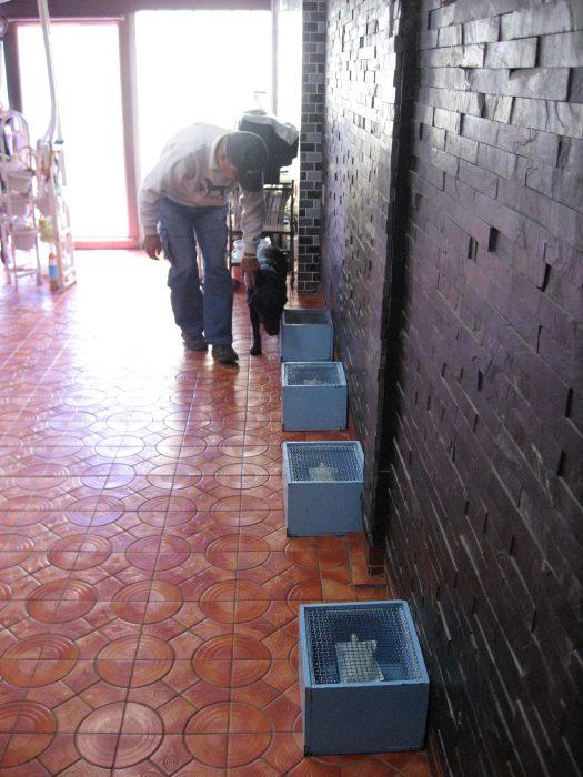 Yuji Sato guides Marine chan to boxes with samples of breath. Photo by Judit Kawaguchi